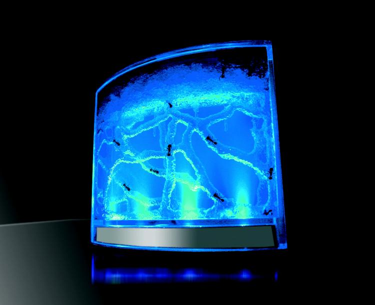 аквариум с включеной подсветкой